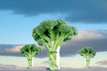 Broccoli by victorburnside
