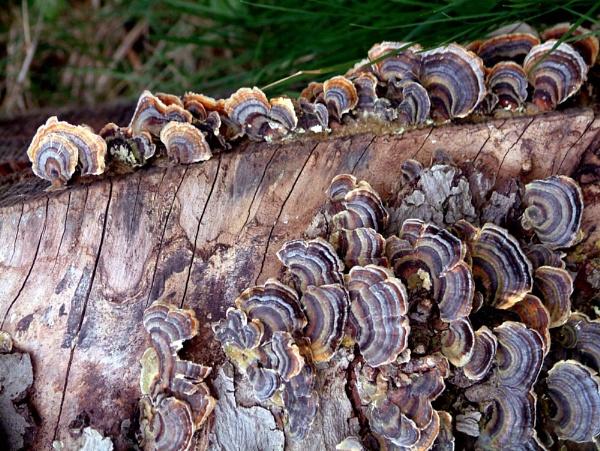 Fungus by NickCoker