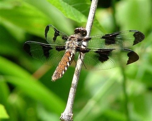dragon fly by jeffandrebecca