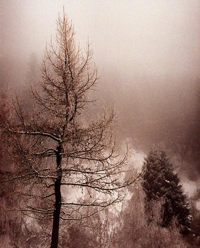 A foggy day by tudor
