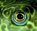 FISH EYE LENS by sze4j