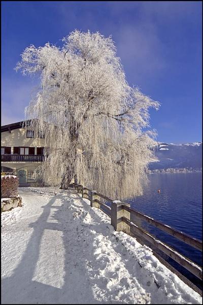 Beside Lake Zell, Austria by Stevo