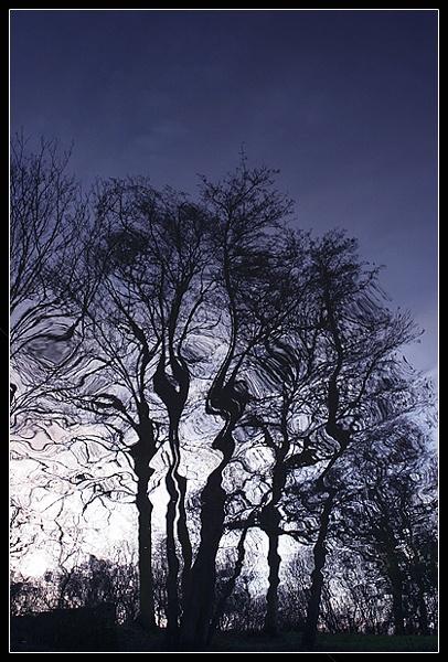 Trees Reflected by kidda