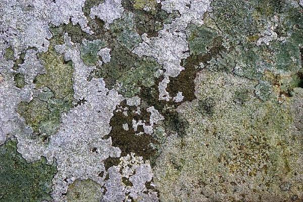 Map of Lichen by kidda