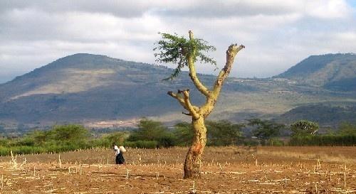 Kenya lanscape by Marlin_owner