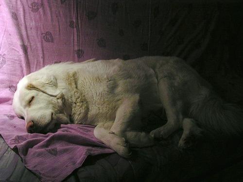 Beauty nap by blizz