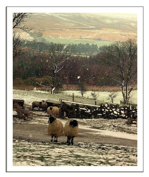 Snow on the farm by lyne