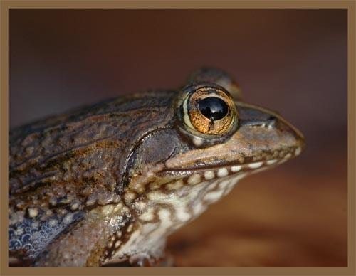 Frog2 by sferguk