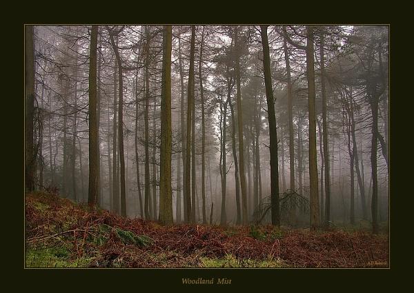 Woodland Mist by proberts