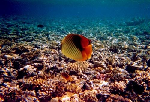 Underwater Reef by suregork