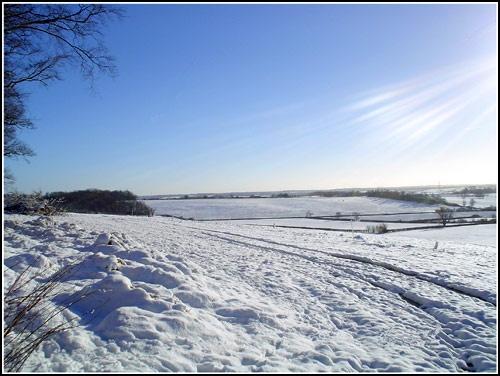 Snow by jenny