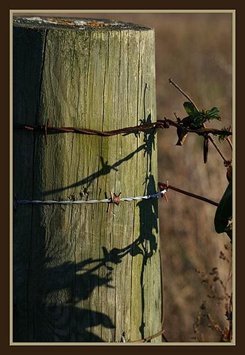 Winter Shadows by thetriguy