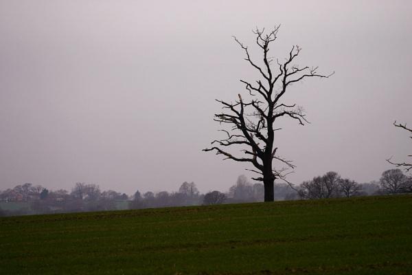 My Lone Tree by NickCoker