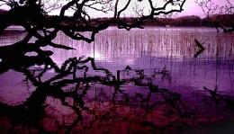 Lake by Killarney, Ireland