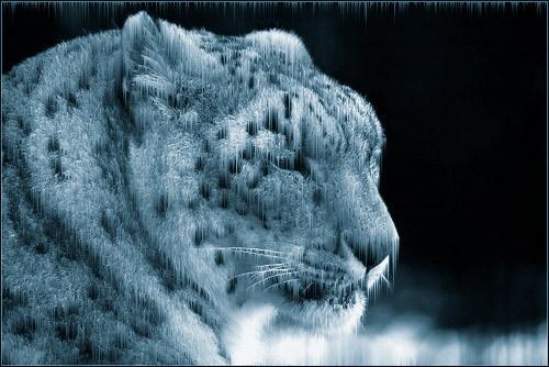 Snow Leopard 2 by Hoffy