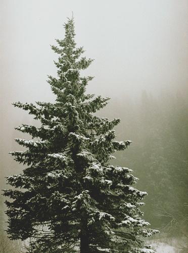 A Foggy Day 4 by tudor