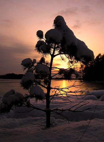 lonely tree by ojjo