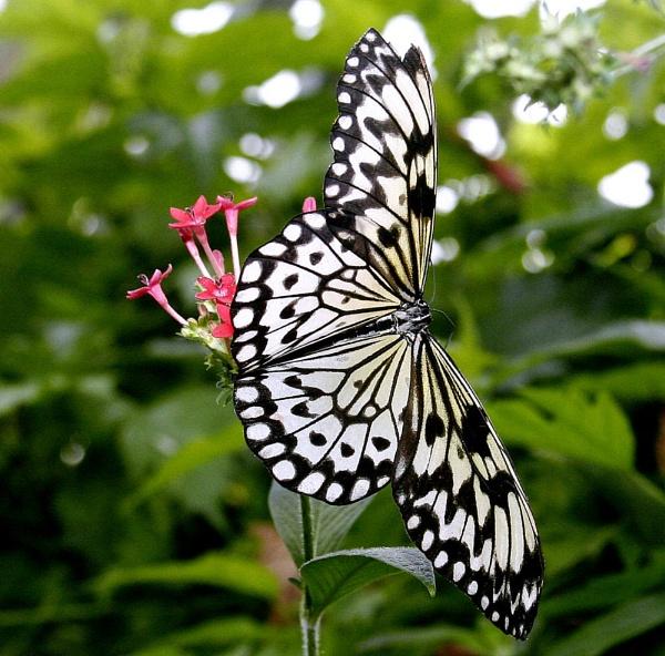 Butterfly by StevenPrice