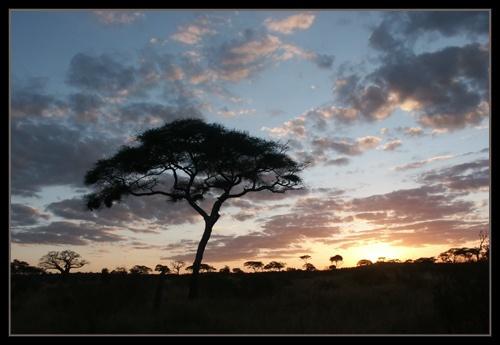 Tarangire Sunset by AntonR