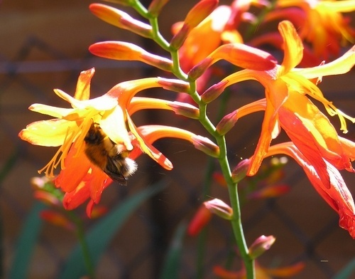 bee and flower by cassielang