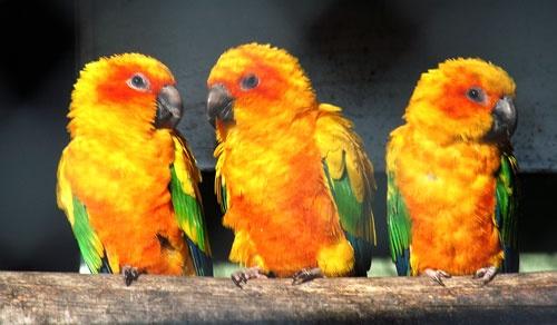 Birds by gma