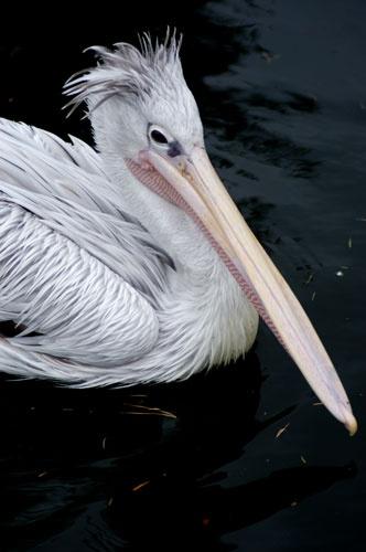 Beaky by gma