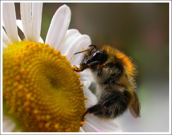 Pollen Count by naturenut