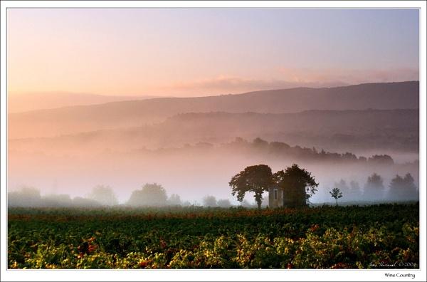 Mist in the Wine by celestun