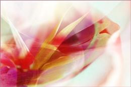 Abstract flowers II