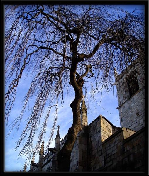 Tree & sky by Dinda