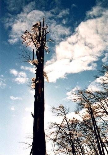 tree and sky by borisv