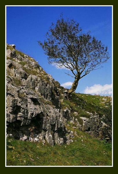Lone Tree by markthompson