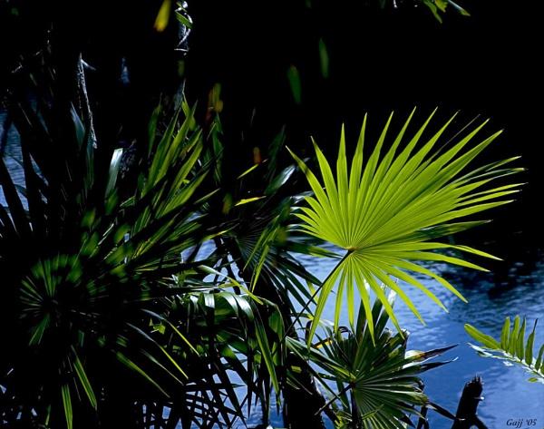 Cenote Palms: Light and Shadows by gajj