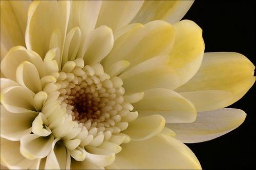 Flower by gillymot