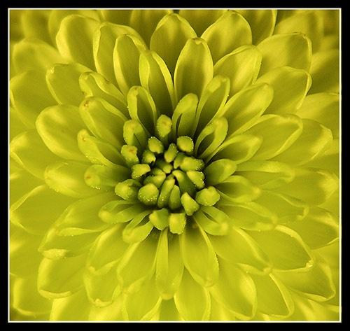 close-up of a bloom by deeken