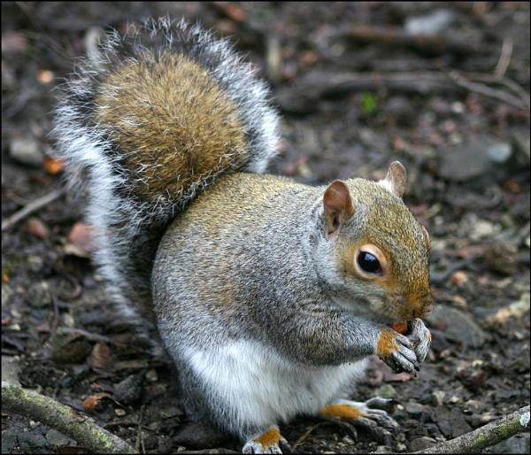 squirrel 2 by christabella