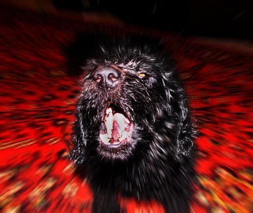 Bark Bark!!! by elikag
