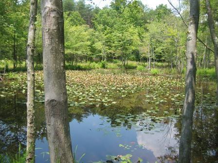 Patuext Wetland by cheop
