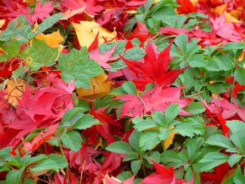 Leaf Color by G3