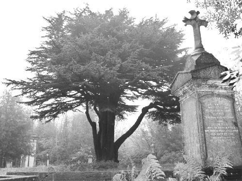 Highgate Cemetery 3 by casey