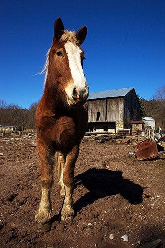 Horsey by ventmonkey