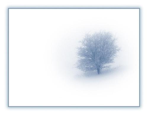 tree by TTT