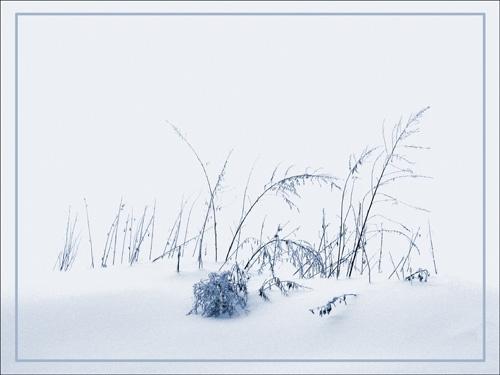Grasses by TTT