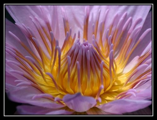 Wild Flower by liparig