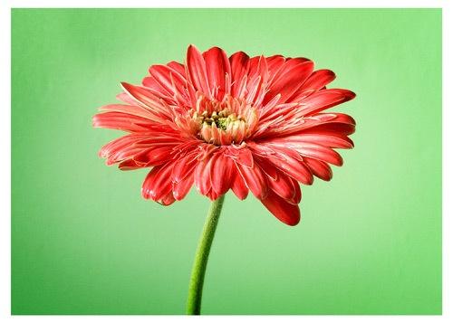 Flower by victorburnside