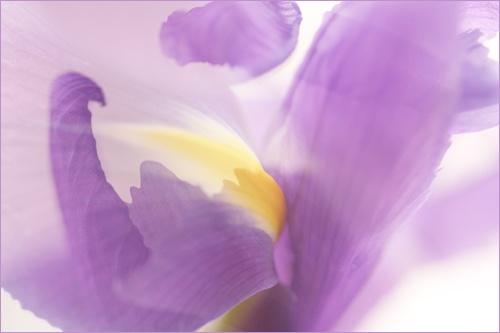 Abstract Flower V by webjam