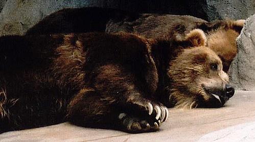 Sleepy Bears by kaybeeminimetwo