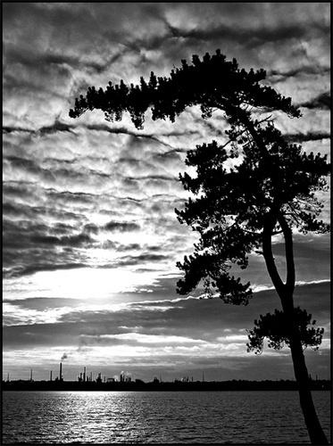The Tree by peterhorner