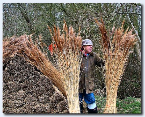 Reed Cutter by Jimbob