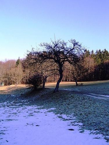 Black Tree by Poziomka